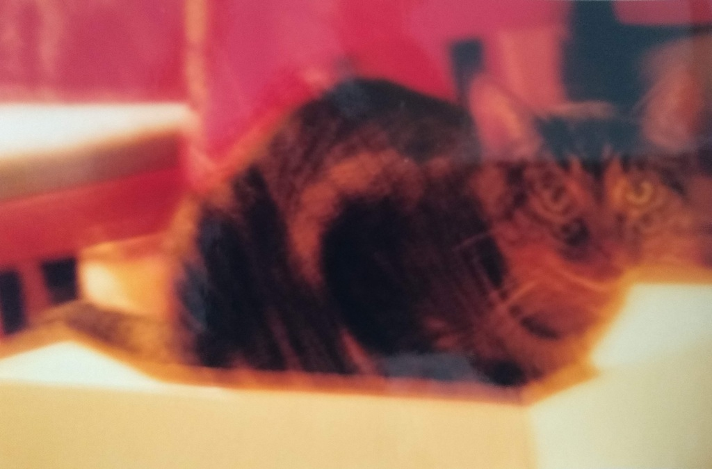 Blurred photo of a tabby cat on a red background